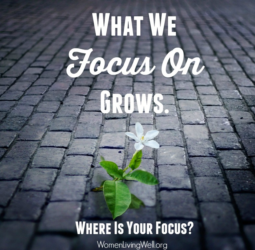 What we focus on grows - where is your focus?